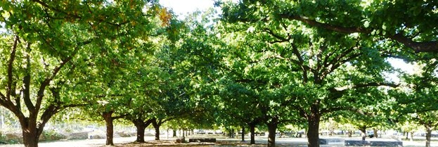 Canberra Protected Trees