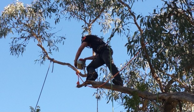 Pruning Branches Canberra Bushfire Preparation