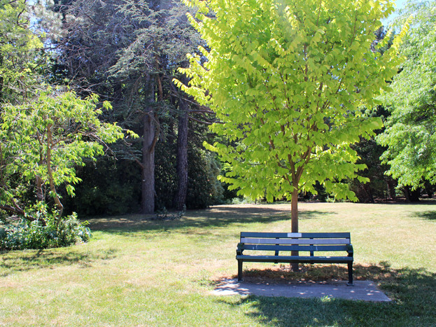 Caring for trees in the heat