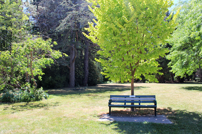 Caring for trees in long dry heat gold leaf tree services for Trees garden of jane delawney blogspot