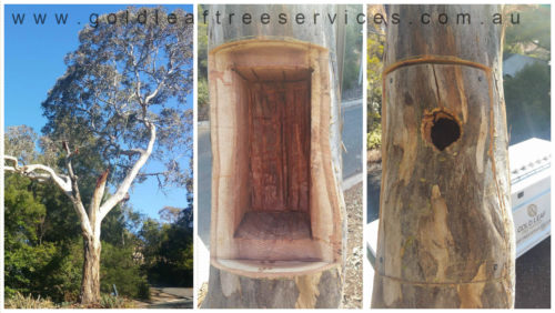 Habitat Hollow - an alternative to tree removals