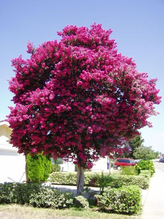 How To Choose Trees For Your Garden Gold Leaf Tree Services